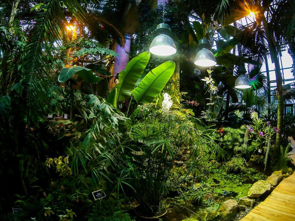 Тропики, пальмы и орхидеи в Аптекарском огороде