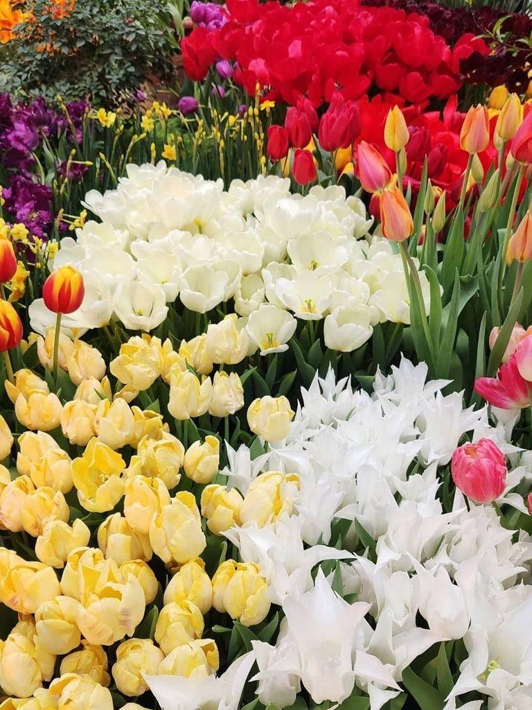 Выставка цветов в Ботаническом саду