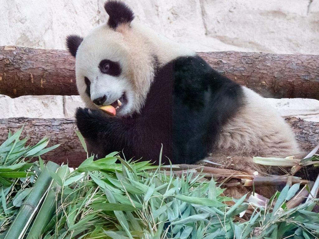 Московский зоопарк закрывается до 10 апреля. Животных Можно увидеть в прямом эфире