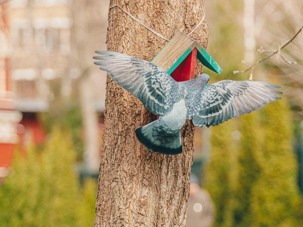 Международный день птиц в Таганском парке