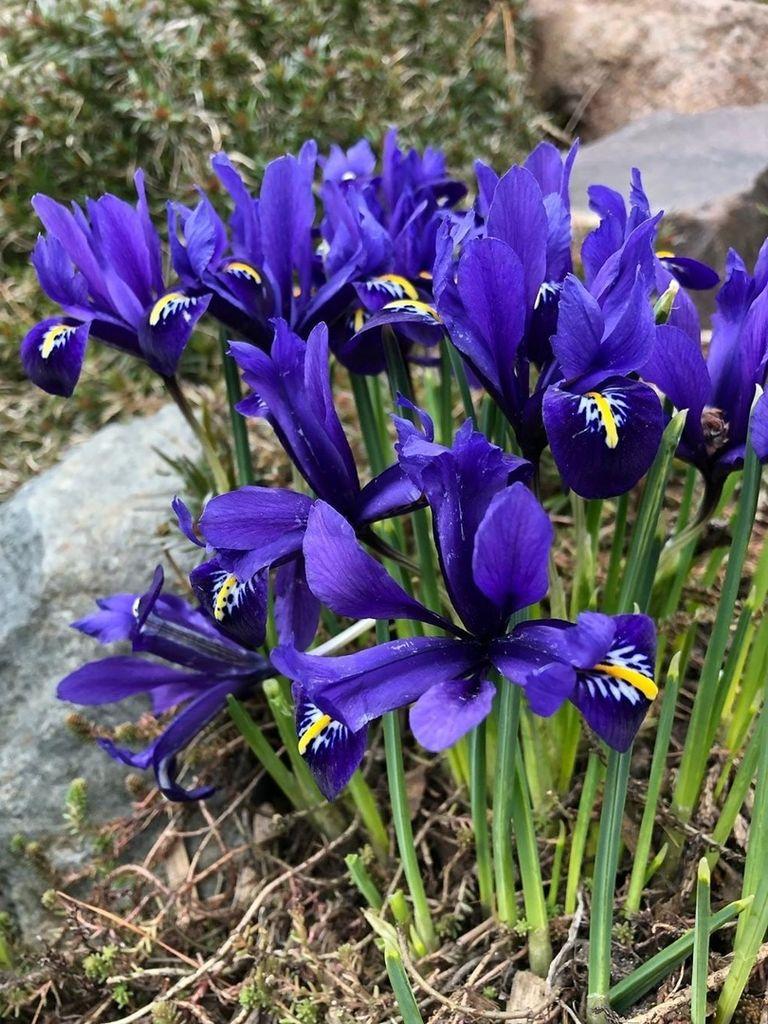 В Аптекарский огород пришла весна