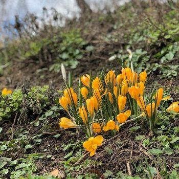 В «Аптекарский огород» раньше нормы пришла весна