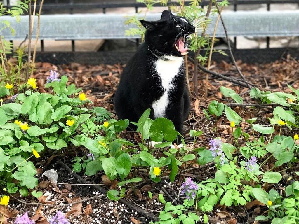 Конкурс Весенний кот
