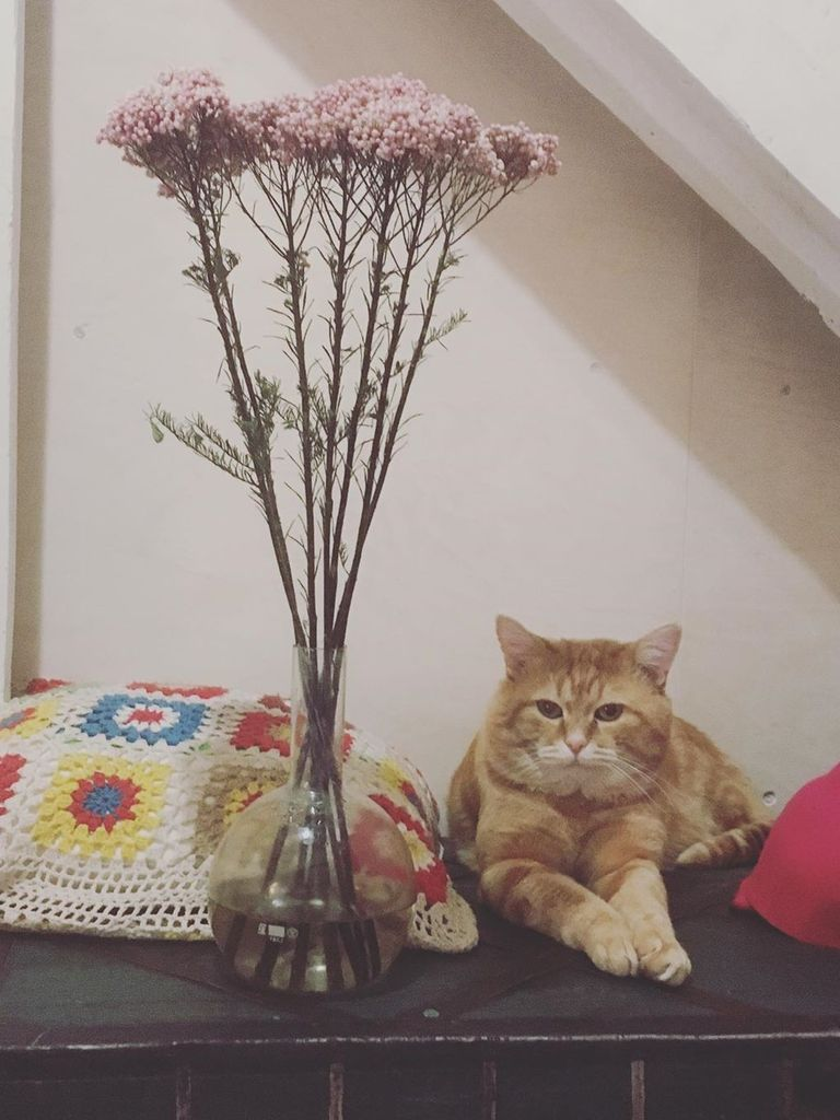 Флешмоб Весенний кот