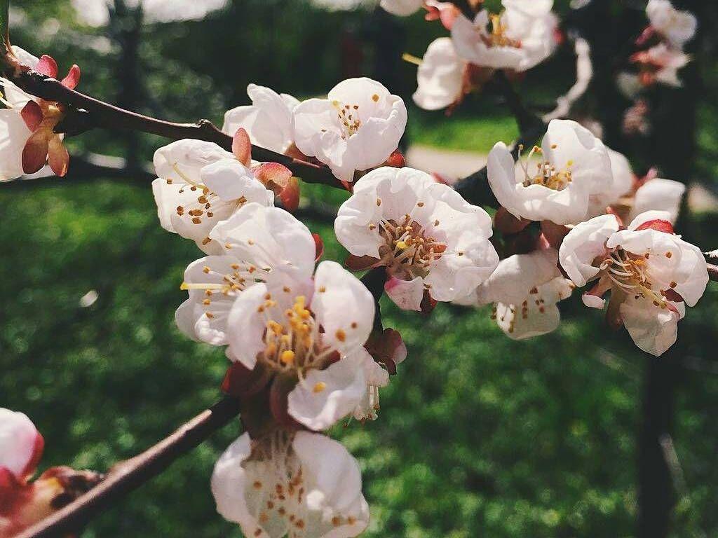 Цветение в Аптекарском огороде
