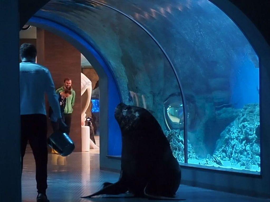 Морской лев Рокки в Москвариуме