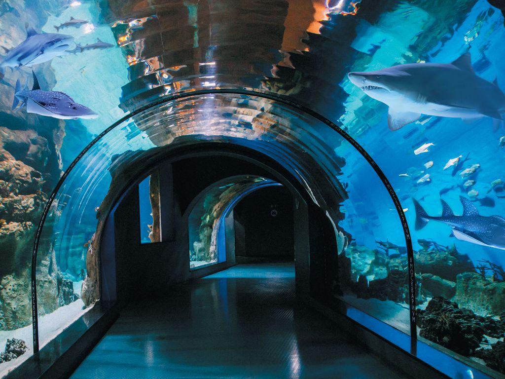 морской тоннель на ВДНХ