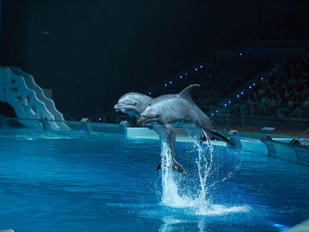 Дельфины Муза и Робин на ВДНХ