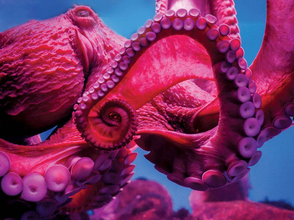 Праздник Всемирный день океанов на ВДНХ
