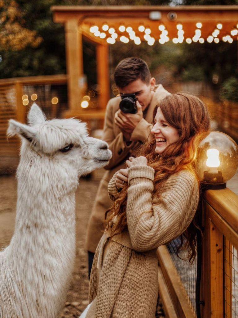 Альпака Парк в Крылатском: фотосессия