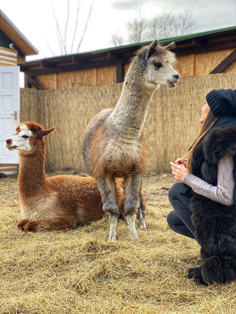 Альпака парк: встречи с животными