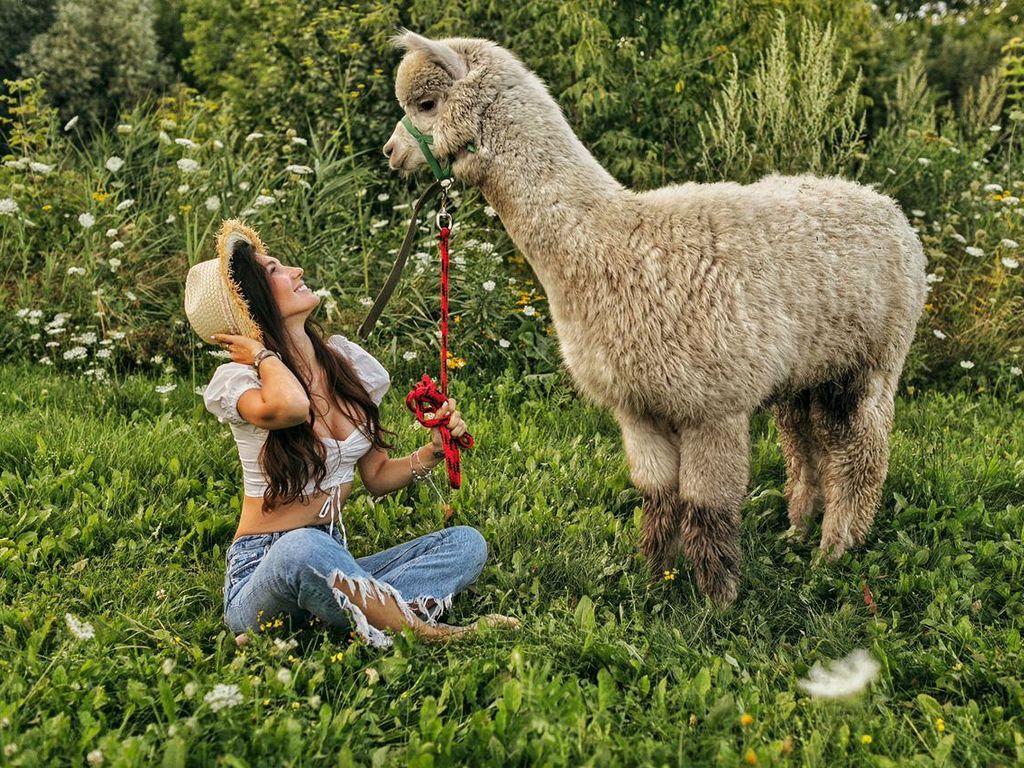 10 причин посетить Альпака Парк
