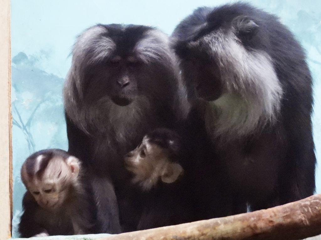 Московский зоопарк: Животные