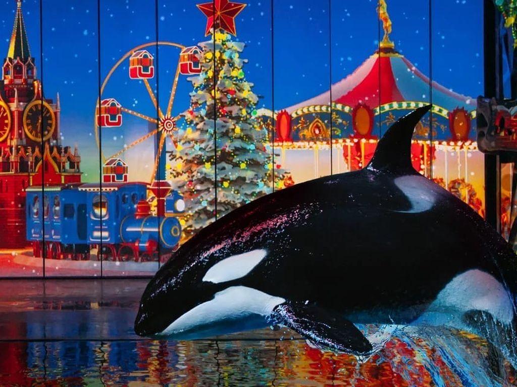 Новогоднее шоу Вокруг света за новый год