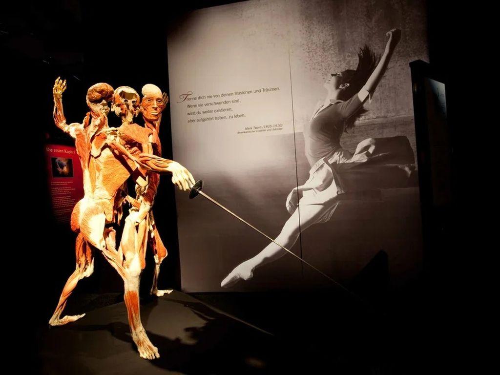 Анатомическая выставка