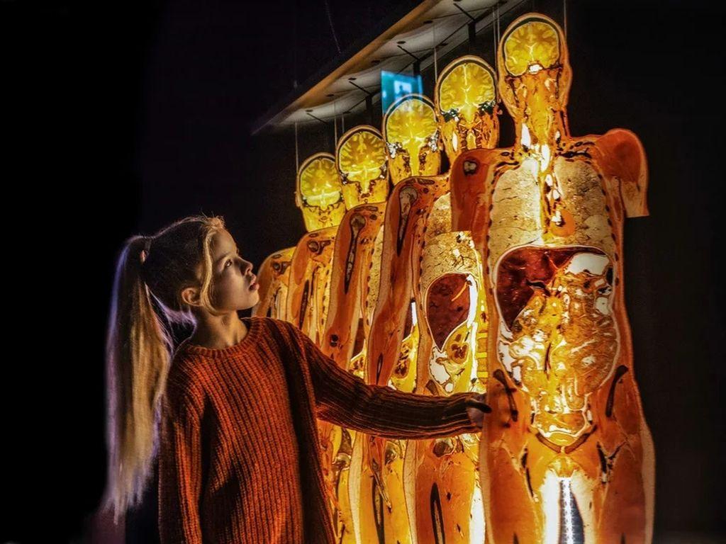 Выставка Body Worlds. Мир тела