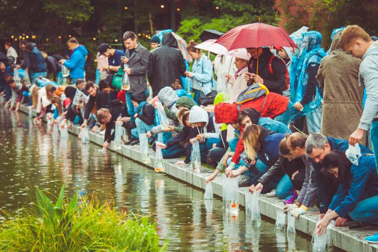 Плавучие сады для рыб в Ботаническом саду МГУ «Аптекарский огород»