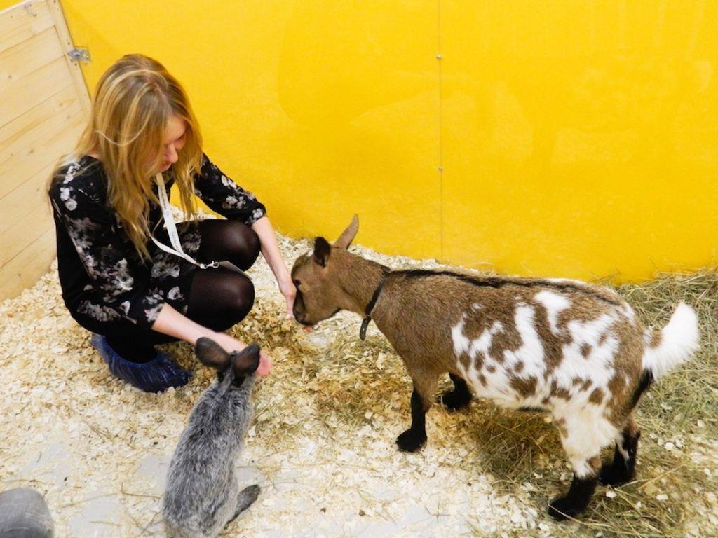 Контактный зоопарк «Погладь енота» в ТРЦ Афимолл Сити