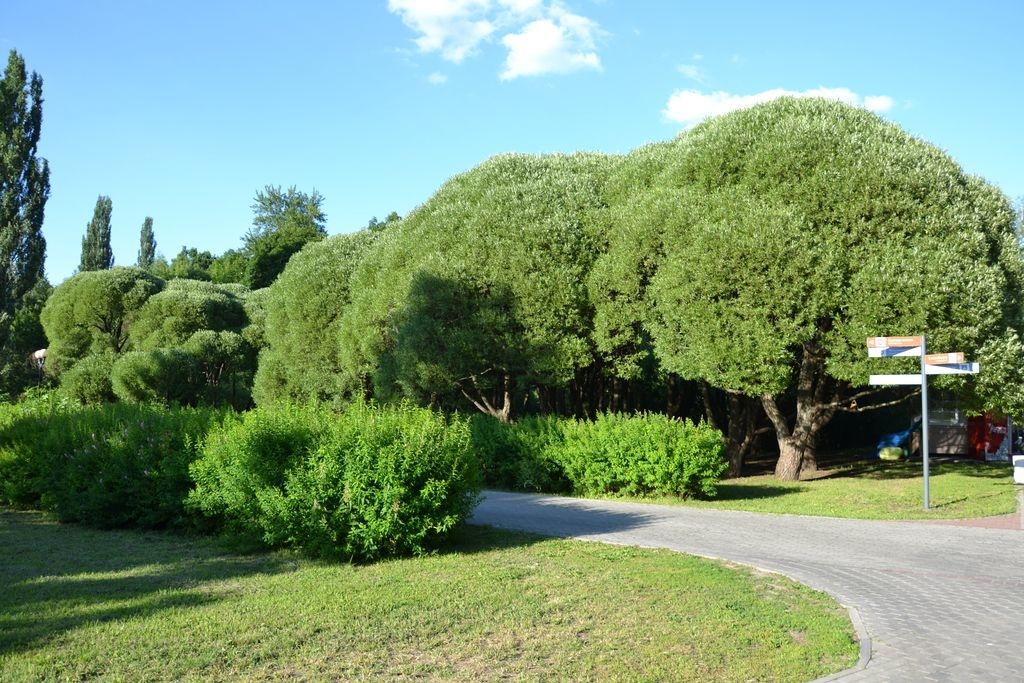 Эко-экскурсии в Измайловском парке
