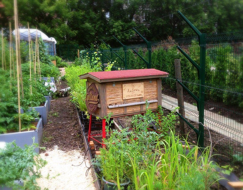 Плавучие сады для рыб и Городской сад для пчёл в «Аптекарском огороде»